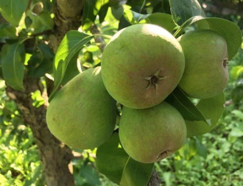 Grădină la țară – avantaje și dezavantaje