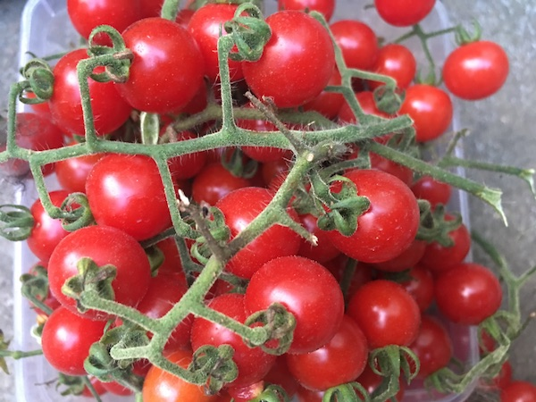 Porodici de Apuseni - soiuri de roșii