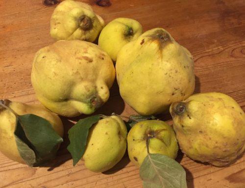 Pastă de gutui fără zahăr preparată din fructe de grădină