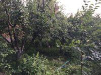 Agricultură la distanță - Meri în grădină