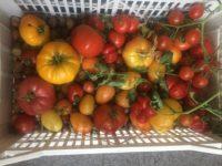 Agricultură la distanță - Mix de roșii multicolore