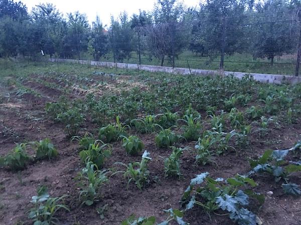 Culturile diversificate, o soluție bună pentru agricultura de weekend