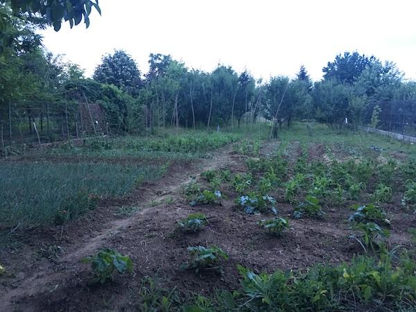 Diversitate în grădină, soluția pentru agricultura de weekend