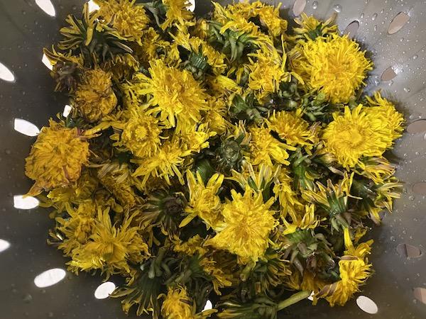 Flori de păpădie