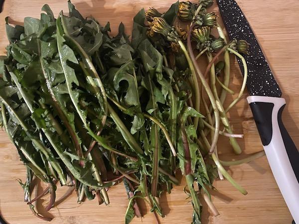 Rețete cu păpădie - tulpini și frunze de păpădie