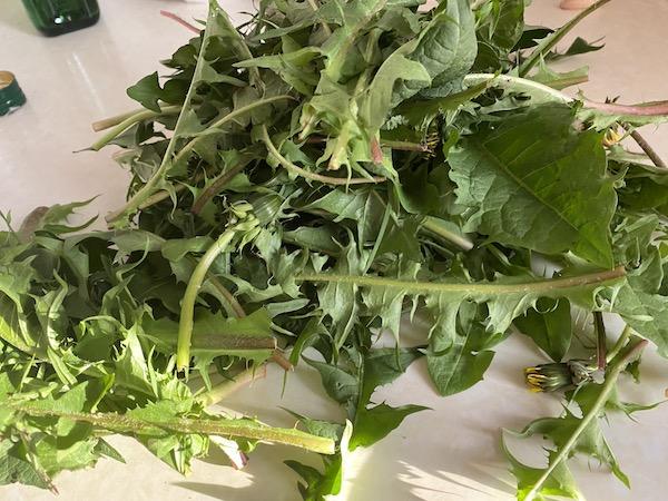 Rețete cu păpădie - frunze de păpădie
