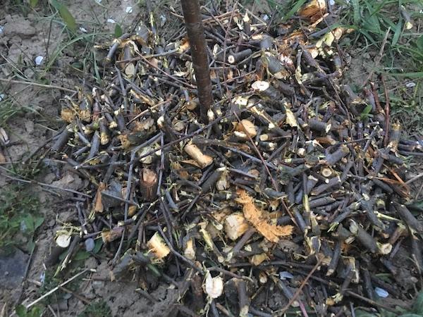 Mulcire cu lemn tocat, de ajutor în agricultura de weekend